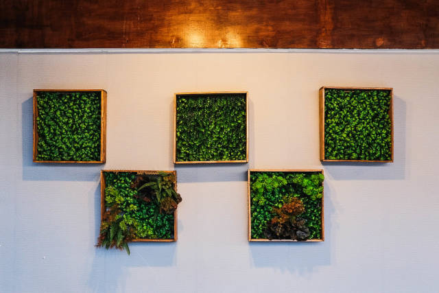 Symmetrical plant frames hanged on white wall