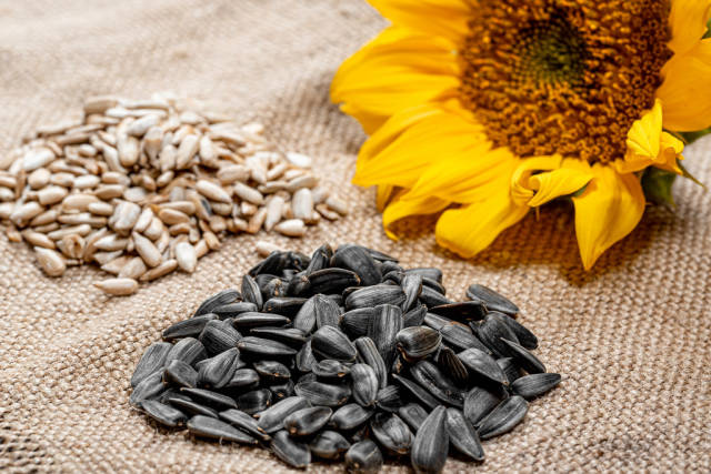 Sunflower seeds peeled and in-shell with a fresh sunflower on burlap