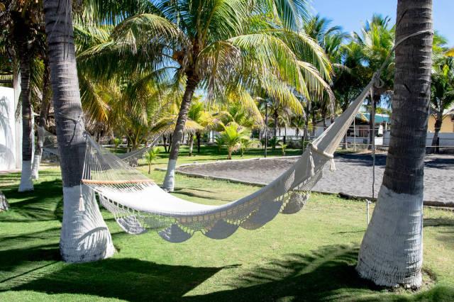 Beige beach hammocks hanging in between palm trees