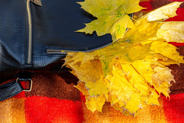 Backpack with autumn yellow maple leaves