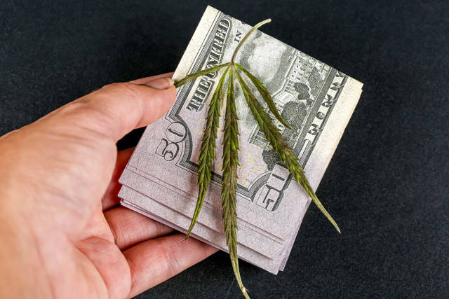 Dollars and a green cannabis leaf in a womans hand on a dark background