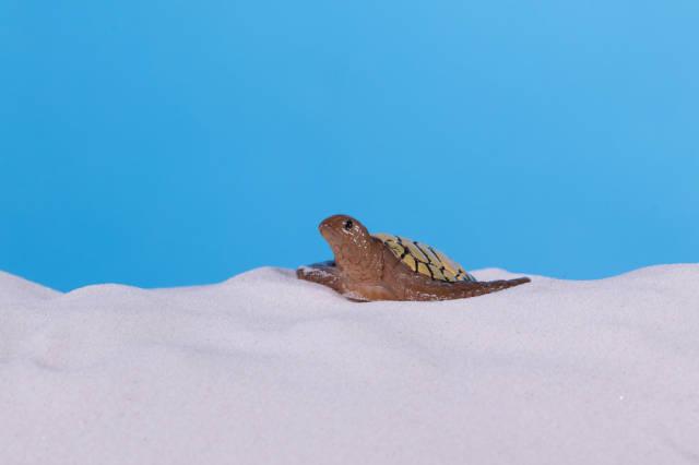 Turtle on beach sand