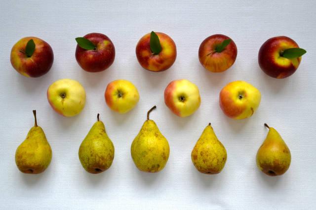 Birnen und Äpfel