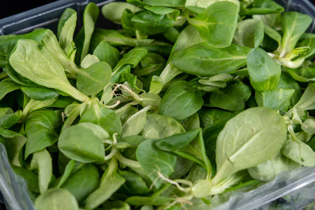 Top view of Baby Spinach on the pile
