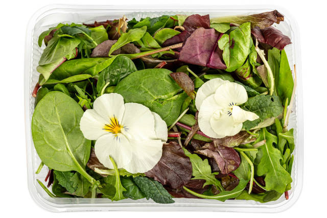 Salad mix arugula, lettuce, flowers and spinach, top view