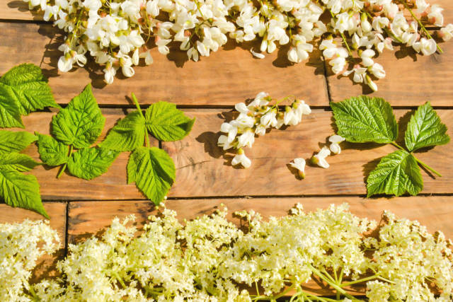 Flowers and herbs from the forest on a wooden background