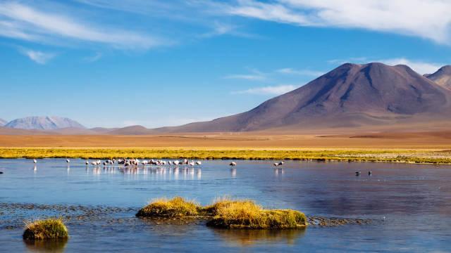 Flamingos and the mountain / Flamingos und der Berg