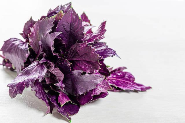Basil herb spice leaf on white background