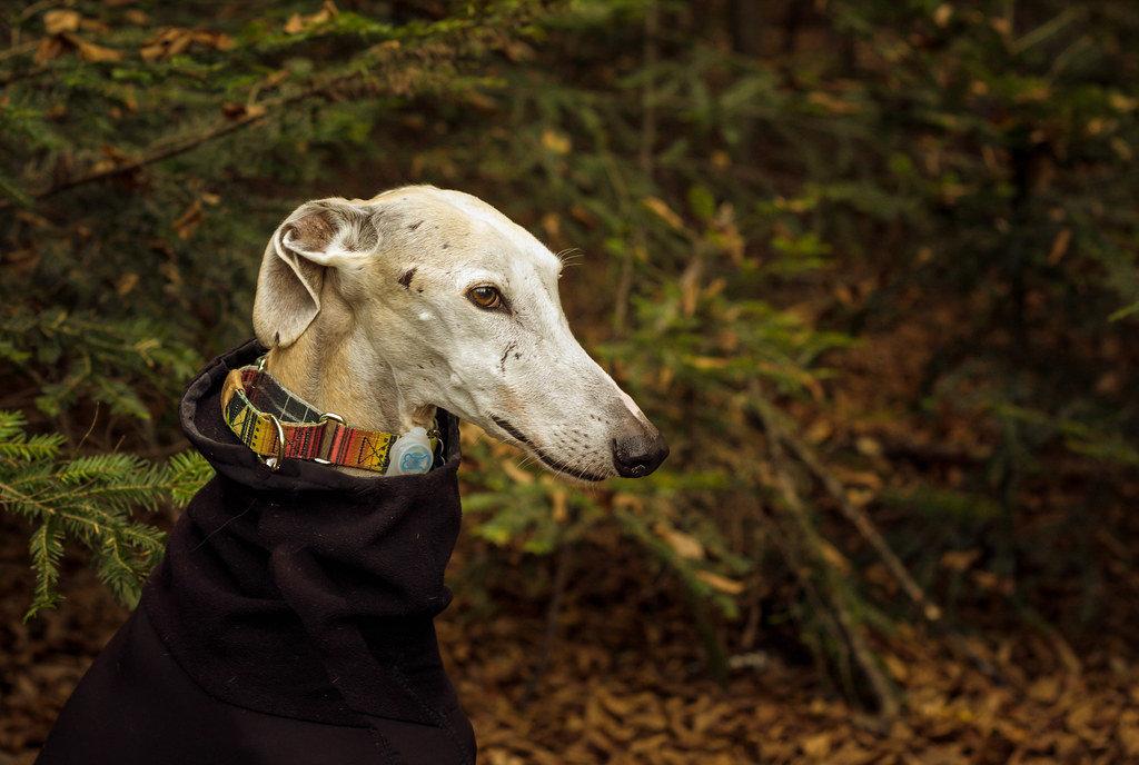 Dog with fleece coat