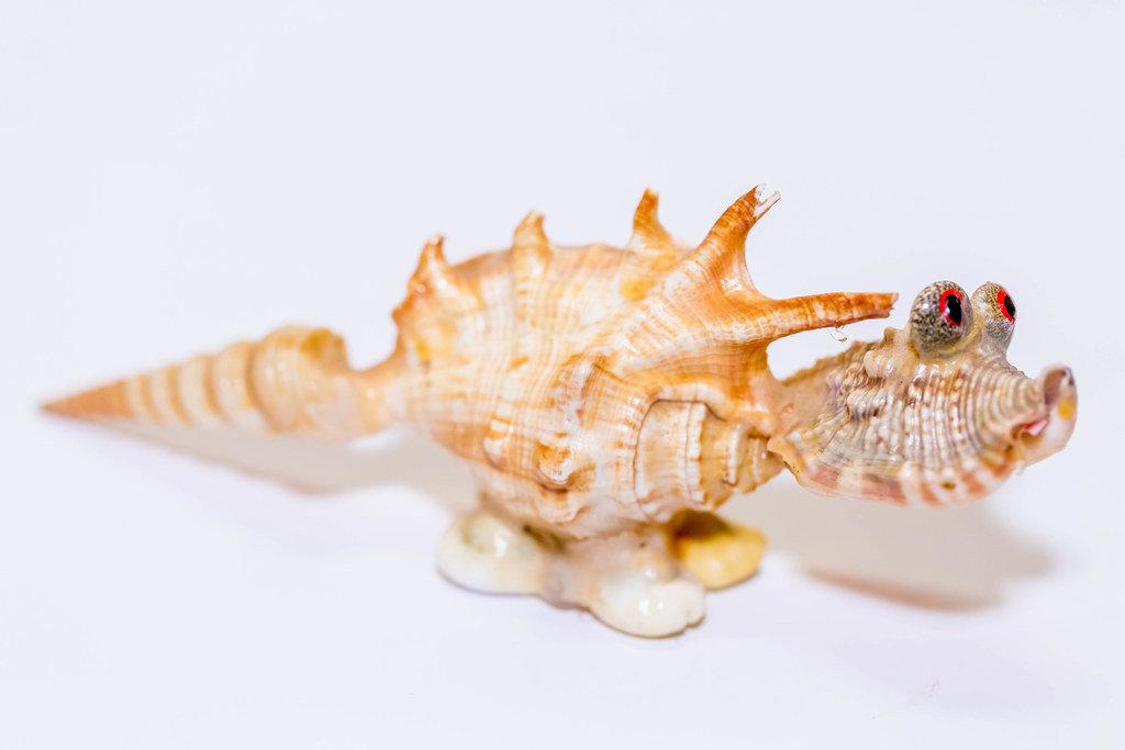 A dinosaur made of shells
