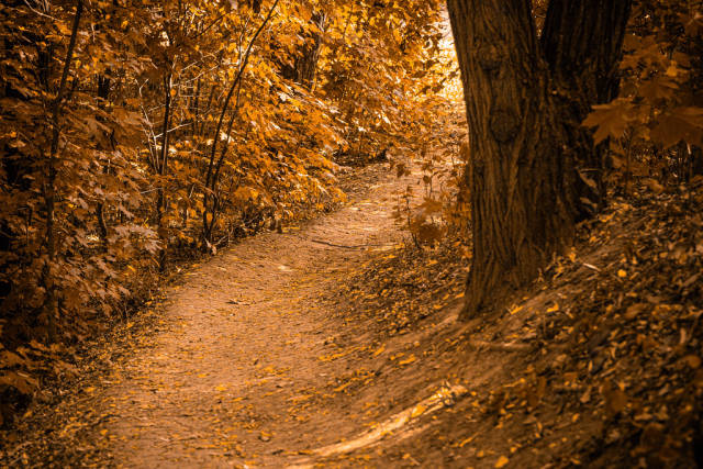 Beautiful autumn forest landscape, path in the forest