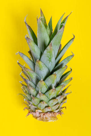 Green pineapple leaves on yellow background