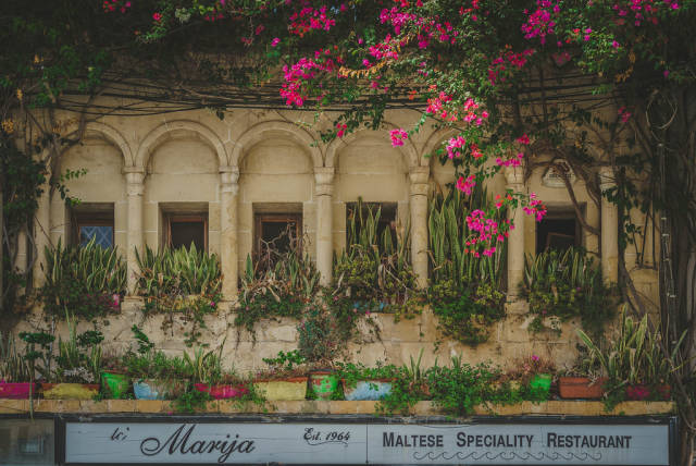 Plant Balcony Of Restaurant