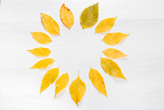 Circle of yellow autumn leaves on a white wooden background