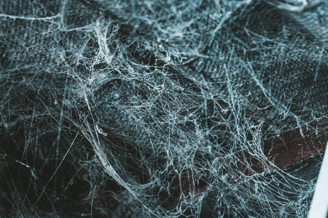 Real spider web background. Concept halloween