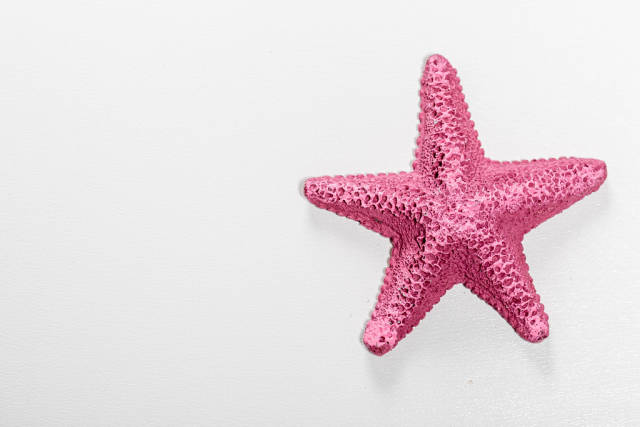 Top view of purple starfish on a white background