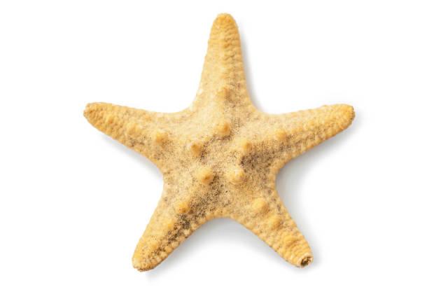 Starfish on white background, top view