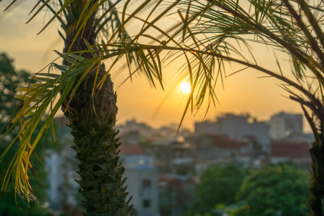 Sunset View of Hanoi with Palm Trees in the Foreground
