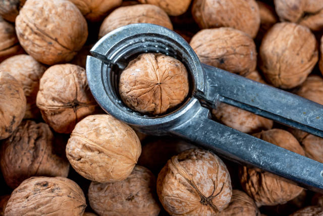 Walnut in nut cracker