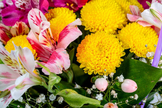 Flower background with yellow, pink and white flowers