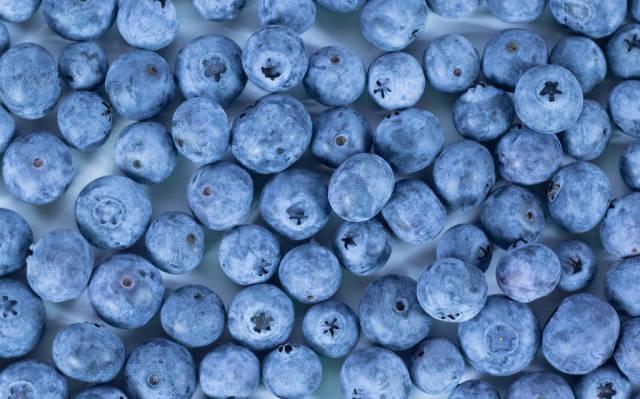 Hintergrund bestehend aus frisch gepflückten Blaubeeren