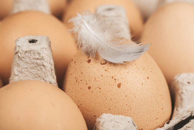 A carton crate of fresh eggs with white feather on the top