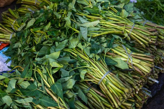Kangkong leaves bundled together