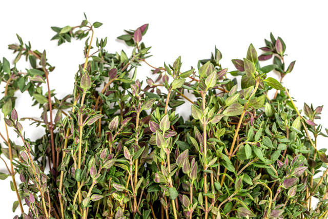 Close-up, fresh green thyme herb