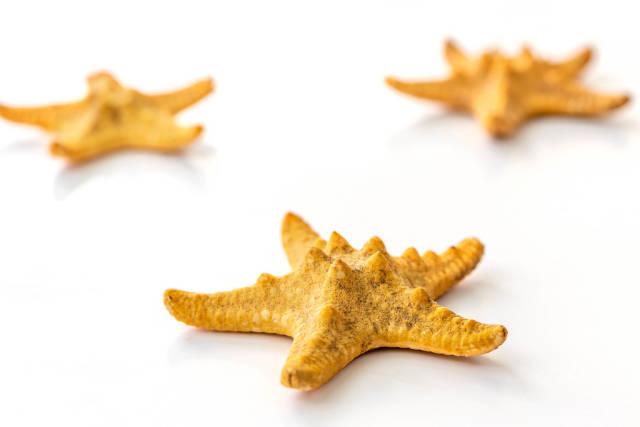 Starfish shells on a white background