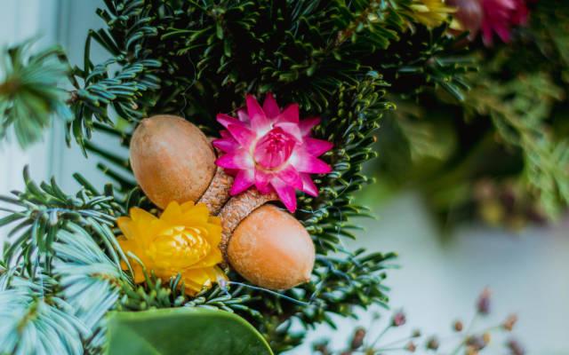 Eichel Früchte