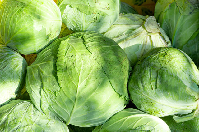 Fresh cabbage background. The concept of harvest
