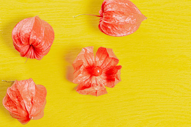 Orange physalis on a yellow background. Top view