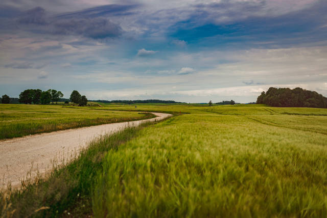 Flat Landscape Of Road And Wheat Meadows