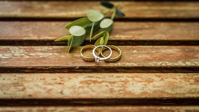 Eheringe und Verlobungsring vor kleinem Strauch mit sattgrünen Blättern auf Holztisch