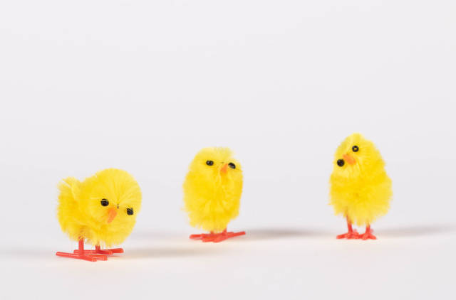 Set of cute small chickens on white background