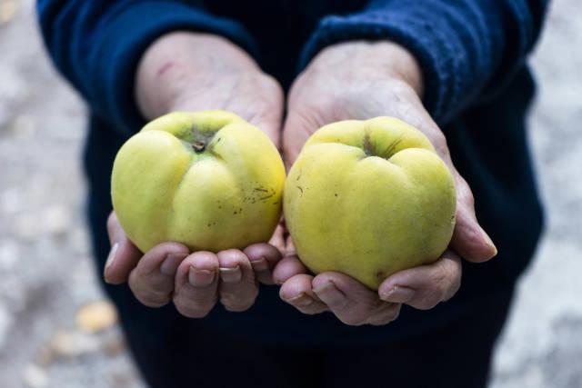 Alte Frau mit zwei Quitten in ihren Händen