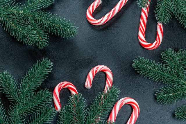 Christmas background with Christmas tree branches and cane candies