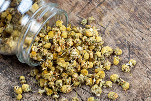 Dried chamomile tea on old wooden background