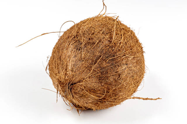 A whole coconut on a white background