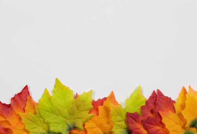 Weiße Fläche mit abgefallenen Blättern. Symbolbild für Herbst