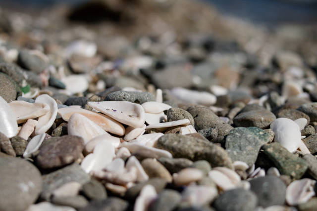 Background with different color sea stones