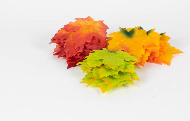 Autumn colorful orange, red and green maple leaves