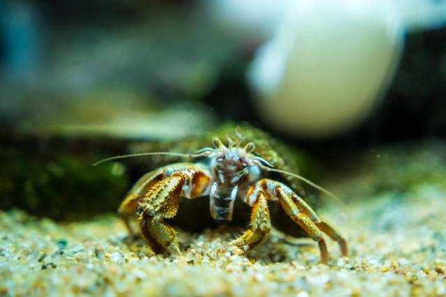 Ocean crab face