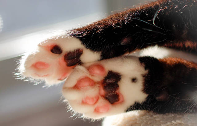 Pink Paws Close-Up