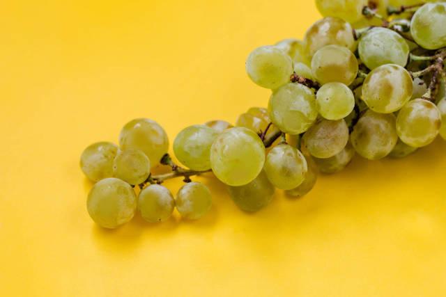 Grüne Weintrauben vor gelbem Hintergrund
