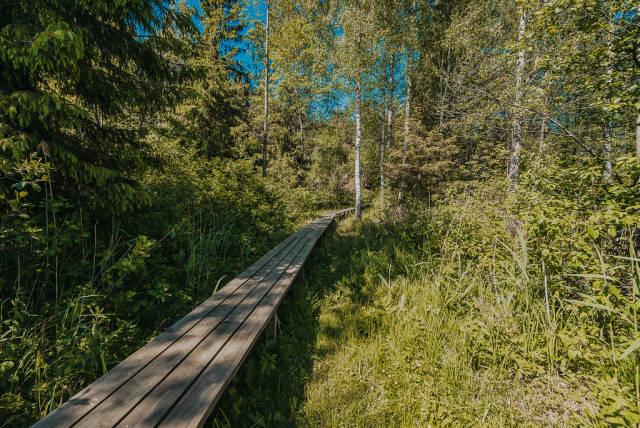 Pfad aus Holzbrettern durch den Wald