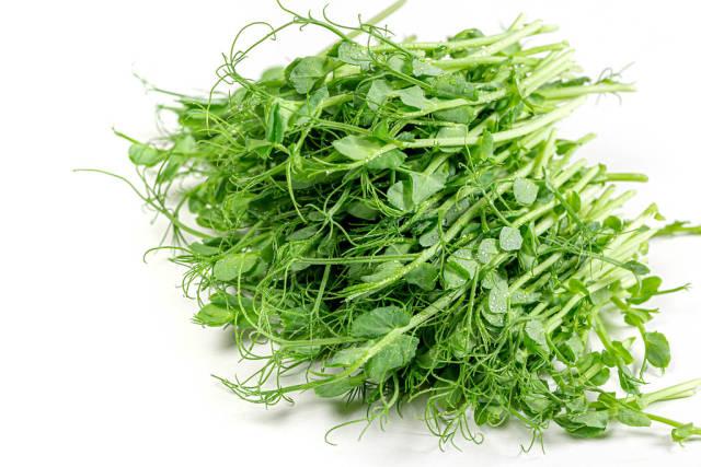 Fresh raw micro greens pea on white background