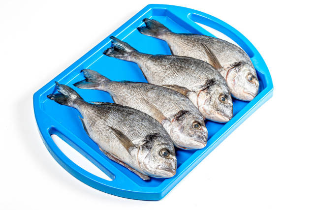 Raw Dorado fish on a blue tray. The view from the top