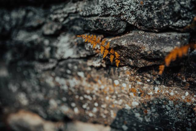 Little Mountain Orange Ferm Growing