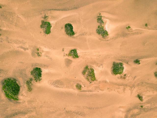 Wüste mit vereinzelten grünen Sträuchern aus der Vogelperspektive